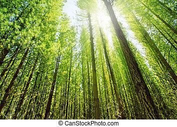 las, światło słoneczne