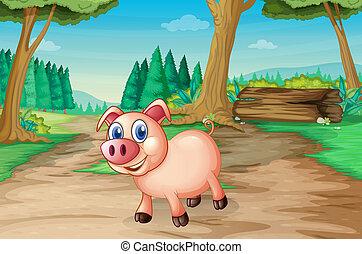 las, świnia