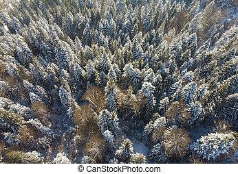 las, prospekt, antena, zima natura