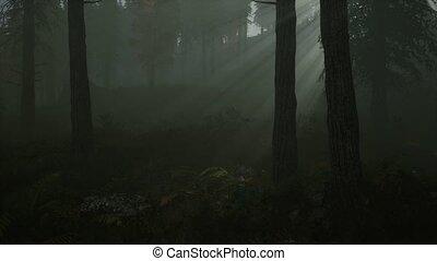 las, rano, jesień, mgła