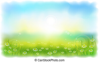 lato, łąka, daisies., sun-drenched, słoneczny, outdoors., dzień