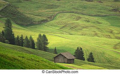 lato, antena, pola, zielony, przed, żniwa, prospekt