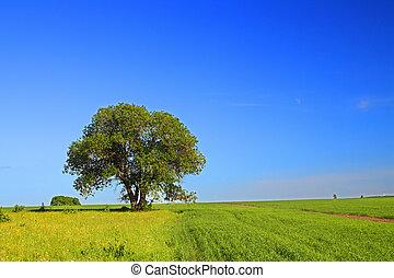 lato, drzewo krajobraz
