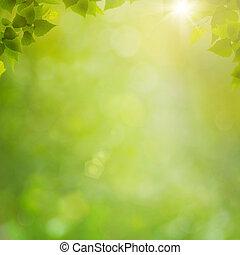 lato, kasownik, abstrakcyjny, tła, bokeh, las, liście, świeży