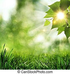 lato, kasownik, abstrakcyjny, tła, rano, wcześnie, las