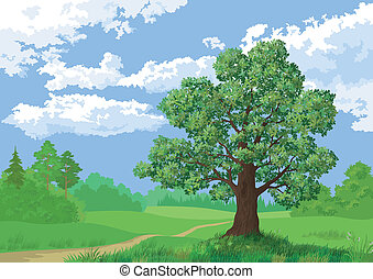 lato, krajobraz, drzewo las, dąb