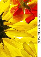 lato, kwiaty, czerwony żółty, tło.