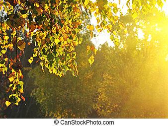 lato, las, drzewa, brzoza
