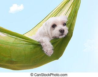 lato, leniwy, pies, dazy, dni
