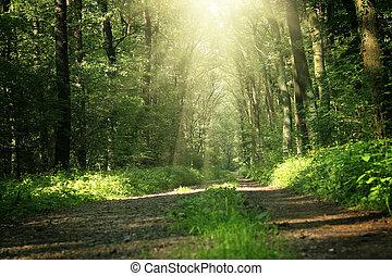 lato, pod, bri, drzewa, las