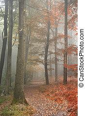 lato, pokazał, pojęcie, wizerunek, jeden, jesień, pory, las, upadek, wymiana, krajobraz