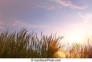 lato, sztuka, zachód słońca, tło, przeciw, niebo, abstrakcyjny, świeży, trawa