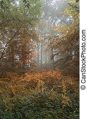 lato, wizerunek, autumn las, konceptualny, wymiana, krajobraz
