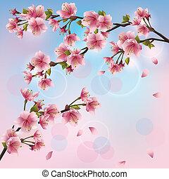 lekki, sakura, tło