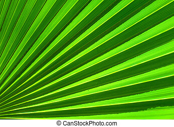 liść, abstrakcyjny, dłoń, closeup, tło, zielony