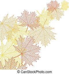 liść, bacground, makro, jesień, wektor, maple.