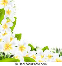 liść, brzegi, frangipani, kwiaty