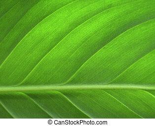 liść, closeup, zielony