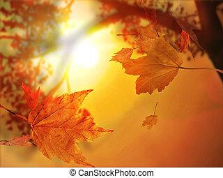 liść, jesień, upadek