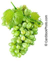 liść, owoc, zielone winogrona, świeży, żniwa