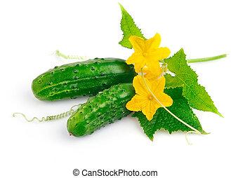 liście, świeży, zielony, owoce, ogórek