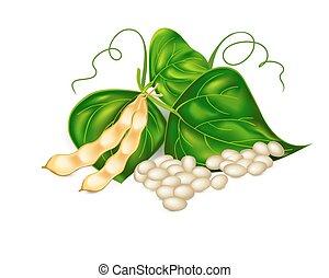 ), (, liście, fasola, sos z fasoli sojowej, nerka