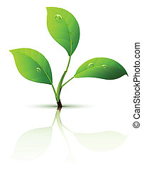 liście, gałąź, kiełek, zielony