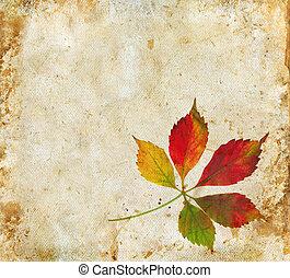 liście, grunge, tło, upadek