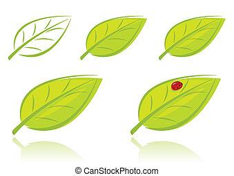 liście, komplet, wektor, zielony