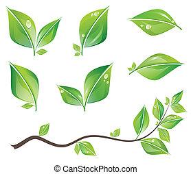 liście, komplet, zielony