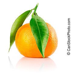 liście, mandarynka, odizolowany, owoc, zielony, świeży