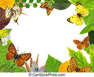liście, motyle