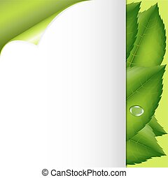 liście, papier, zielony