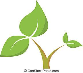 liście, pień