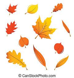 liście, rozmaity, upadek