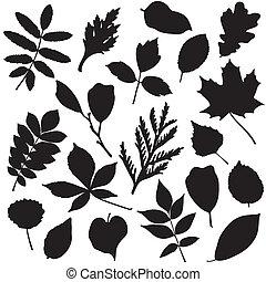 liście, sylwetka, zbiór