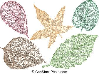 liście, wektor, jesień