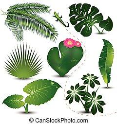 liście, zbiór, tropikalny