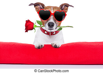list miłosny, pies, dzień
