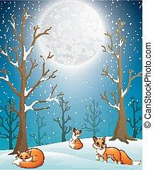 lisy, spadanie, noc, śnieg, tło, zima, cieszący się, sprytny