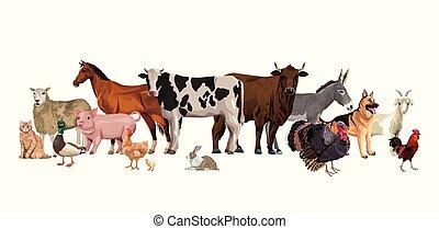 litery, grupa, zagroda zwierzęta