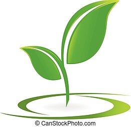 logo, wektor, zdrowie, liście, natura