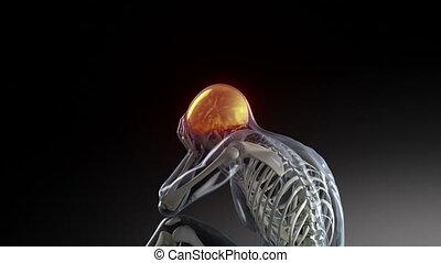 ludzki, ból głowy, samiec, posiadanie