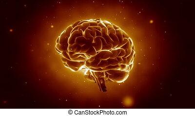 ludzki mózg, pulsowanie