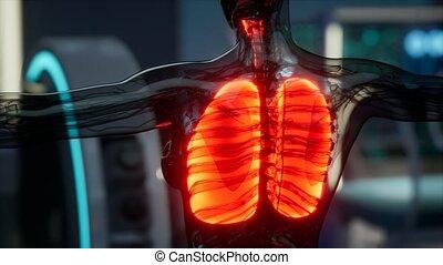ludzki, płuca, rentgenologia, laboratorium, egzamin