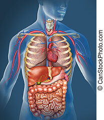 ludzkie ciało