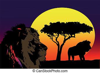 lwy, afryka