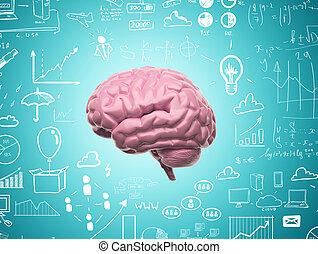 mózg, 3d