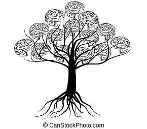mózg, drzewo, wiedza, ilustracja