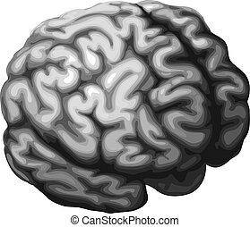 mózg, ilustracja